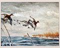 28 -  OIL ON HARDBOARD OF DUCKS, SIGNED WILLIAMSON